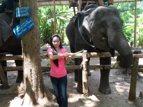 Tour Elephant and Kuangsi fall_ Trip Code iPTP02